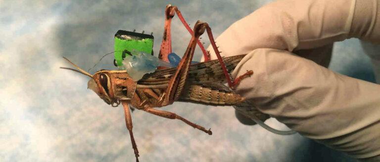 Ученые из США создали роботизированную саранчу сапера