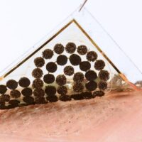 Ученые создали биосенсор по принципу электронной кожи, которому не нужно электропитание.