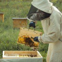 Самарский областной центр пчеловодства получил дополнительную энергию
