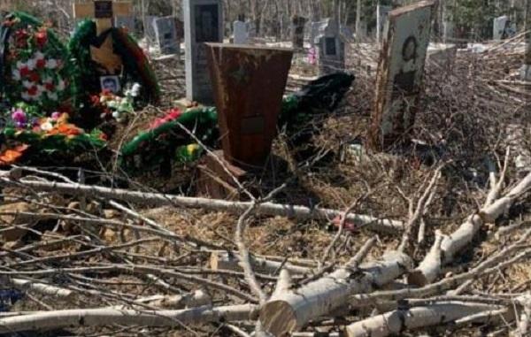 Энергетики Камчатки объяснили причины «кладбищенского» лесоповала