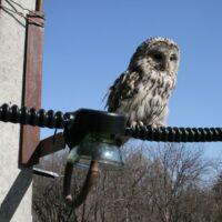 «ФСК ЕЭС» установит в Сибири более 11 тыс. птицезащитных устройств