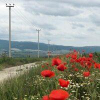 «Россети Кубань» консолидировали запущенные собственниками 12 энергообъектов на юго-западе края