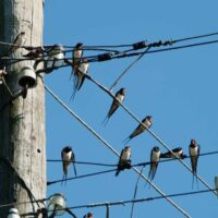 «Россети Северный Кавказ» направят более 2,3 млн. рублей на установку птицезащитных устройств