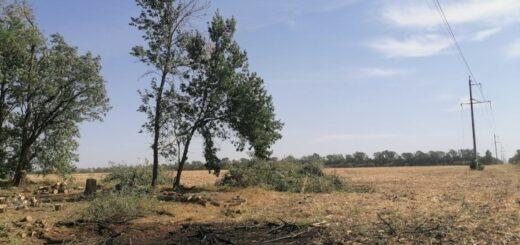 Незаконная вырубка деревьев вблизи ЛЭП стала причиной нарушения электроснабжения
