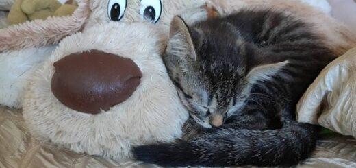 Оренбургские энергетики дают свет приюту бездомных животных