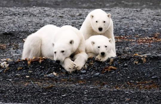 Участники арктических экспедиций «Роснефти» рассказали об исследованиях 2020 года