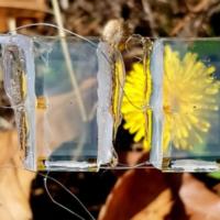 Южнокорейские ученые создали прозрачный солнечный элемент для электронных устройств