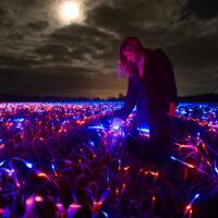 В Нидерландах появилось «ультрафиолетовое» поле