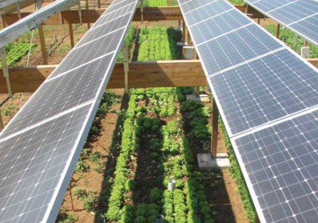 Израильское правительство инвестирует 1 млн. долларов в развитие агровольтаики в стране