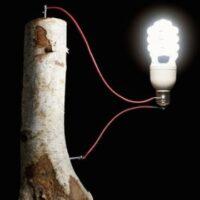 Швейцарские ученые превратили древесину в мини-генератор