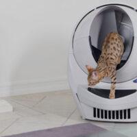 Умный туалет для кошек. Популярные модели, которые помогут избавиться от неприятных запахов