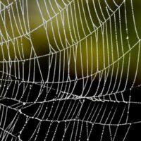 Паучий шелк, созданный без участия паука, заменит пластик