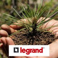 Группа Legrand восстанавливает погибший от пожара лес в Московской области
